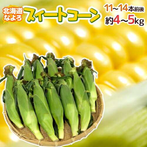 """【送料無料】北海道 JA道北なよろ 高糖度とうもろこし """"スイートコーン"""" 11〜14本前後 約5kg【予約 8月中下旬〜9月】"""