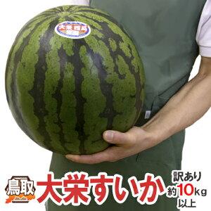 """鳥取県 """"ジャンボ大栄すいか"""" 訳あり 特大5Lサイズ 約10kg以上《2玉購入で送料無料》大栄西瓜【予約 6月中旬以降】"""