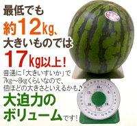 """鳥取県""""ジャンボ大栄すいか""""訳あり特大6L約12kg以上大栄西瓜"""