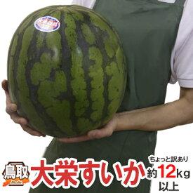 """鳥取県 """"ジャンボ大栄すいか"""" ちょっと訳あり 特大6L 12kg以上 大栄西瓜【予約 6月以降】 送料無料"""