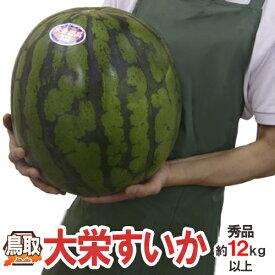 """鳥取県 """"ジャンボ大栄すいか"""" 秀品 特大6L 約12kg以上 大栄西瓜【予約 6月以降】 送料無料"""