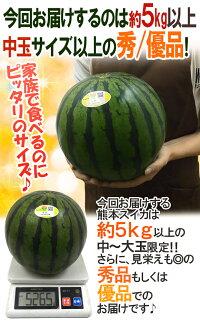 """熊本県""""熊本すいか""""秀/優品約5kg以上1玉"""