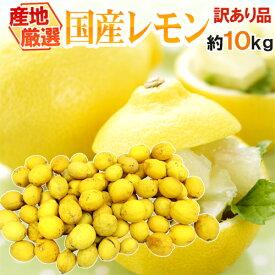 """【送料無料】""""完熟国産レモン"""" 訳あり 約10kg 大きさおまかせ 産地厳選【予約 7月中旬以降】"""