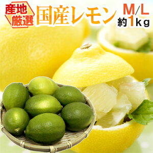 """【送料無料】""""国産レモン"""" 約1kg 6〜8玉前後 M〜L 産地厳選【予約 7月中下旬以降】"""