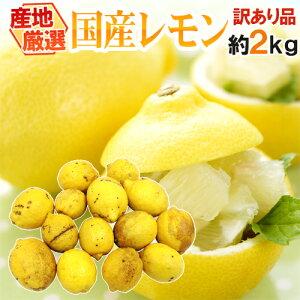 """【送料無料】""""完熟国産レモン"""" 訳あり 約2kg 大きさおまかせ 産地厳選【予約 7月中下旬以降】"""