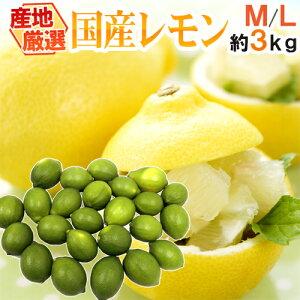 """【送料無料】""""国産レモン"""" 約3kg 18〜24玉前後 M〜L 産地厳選【予約 7月中下旬以降】"""