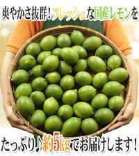 """""""国産レモン""""約5kg30〜40玉前後M〜L産地厳選"""