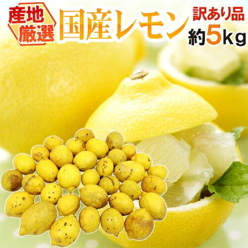 """【送料無料】""""完熟国産レモン"""" 訳あり 約5kg 大きさおまかせ 産地厳選"""
