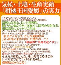 """愛媛産""""紅まどんな""""青秀品以上8〜10玉前後約1.5kg化粧箱"""