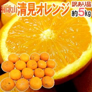 """【送料無料】和歌山産 """"清見オレンジ"""" 訳あり 約5kg 大きさおまかせ【予約 3月以降】"""