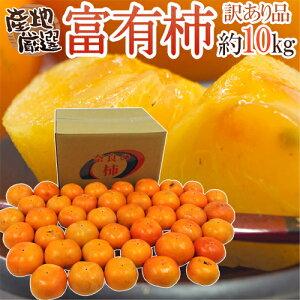 """【送料無料】""""富有柿"""" 訳あり 約10kg 大きさおまかせ 産地厳選【予約 11月以降】"""