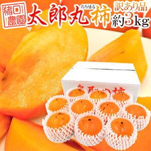 """鳥取県 猪口農園 """"太郎丸柿"""" 訳あり 約3kg 大きさおまかせ【予約 10月下旬以降】 送料無料"""