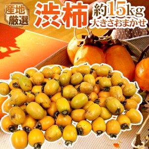 """干し柿・吊るし柿用 """"渋柿"""" 約15kg 大きさおまかせ 「愛宕柿」「大和柿」いずれかを旬な産地で♪【予約 11月中旬以降】 送料無料"""
