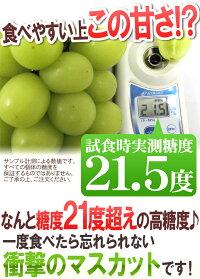 """""""シャインマスカット""""秀品3〜5房約2kg産地厳選"""
