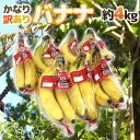 """【緊急スポット】【送料無料】""""バナナ"""" 約4kg 訳あり【2週間以内の発送】"""