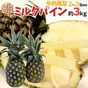 """【送料無料】""""台湾ミルクパイン"""" 2〜3玉前後 約3kg パイナップル【予約 入荷次第発送】"""