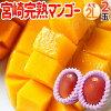宮崎マンゴー秀品大玉2Lサイズ2玉