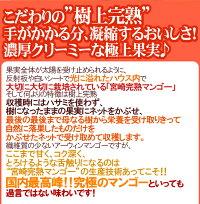 """宮崎完熟マンゴー""""太陽のタマゴ""""超特大4Lサイズ2玉化粧箱"""