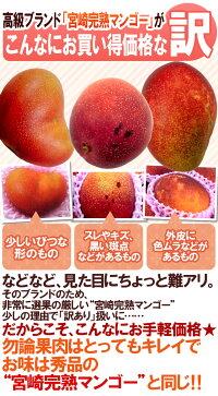 """""""宮崎マンゴー""""訳あり10〜20玉前後約5kg"""