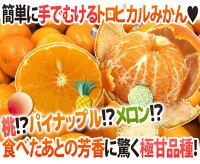 """""""オアオレンジ""""80〜90玉前後約10kgイスラエル産オアマンダリン"""