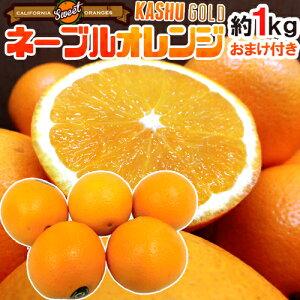 """【送料無料】""""カシューゴールドネーブルオレンジ"""" 大きさおまかせ 約1kg《2kg購入で1kg、3kg購入で2kg、5kg購入で5kg、7kg購入で10kgおまけ》【予約 1月下旬以降】"""