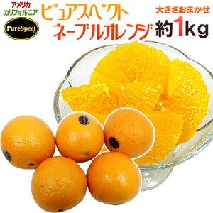 """【送料無料】""""プレミアムネーブルオレンジ ピュアスペクト"""" 約1kg 大きさおまかせ《2kg購入で1kg、3kgで2kg、5kgで5kg、7kg購入で10kgおまけ》【予約 1月下旬以降】"""