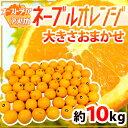 """【送料無料】""""ネーブルオレンジ"""" 大きさおまかせ 約10kg オーストラリア産【楽ギフ_包装】"""