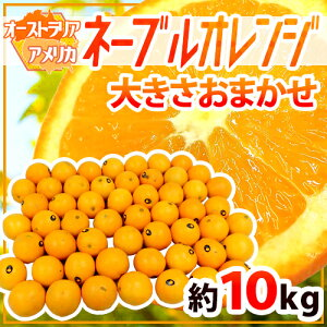 """【送料無料】""""ネーブルオレンジ"""" 約10kg 大きさおまかせ アメリカ・オーストラリア産【予約 入荷次第発送】"""