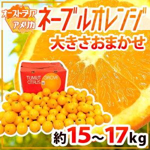 """【送料無料】""""ネーブルオレンジ"""" 約15〜17kg 大きさおまかせ アメリカ・オーストラリア産【予約 入荷次第発送】"""