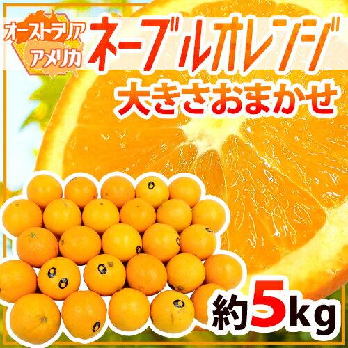 """【送料無料】""""ネーブルオレンジ"""" 約5kg 大きさおまかせ オーストラリア産【予約 7月以降】"""
