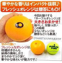 """""""ネーブルオレンジ""""約5kg大きさおまかせアメリカ・オーストラリア産"""