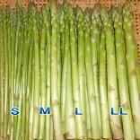 アスパラガス生産農家朝採りグリーンアスパラガスS〜L・LL・ALサイズ(全サイズ混合)1kg