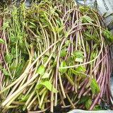 山菜きのめアケビの芽(発送は4〜5月)