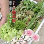 78006山菜天ぷら用セット(発送は4〜5月)