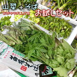 山菜セット天ぷらそば3〜4人