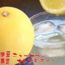 ニューサマーオレンジティー10袋入(粉末ジュース) 静岡県 伊豆限定 おみやげにも 日向みかん 柑橘類 清涼飲料水 オレンジジュース お…