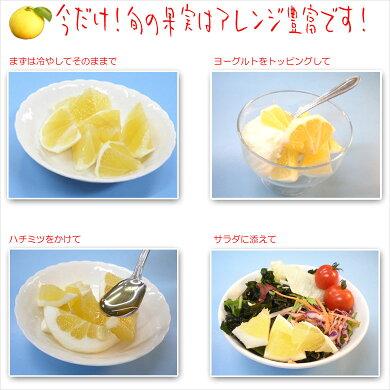 爽やかな香り!送料無料!伊豆産ニューサマーオレンジ