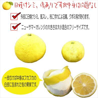 送料無料!伊豆産ニューサマーオレンジ2k