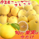 ニューサマーオレンジ 静岡県 伊豆産 4kg 旬の果物 柑橘類 フルーツ ギフト 母の日 父の日 贈答用 送料無料 送料込 通販 お取り寄せ お…