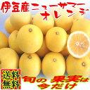オレンジ フルーツ プレゼント くだもの