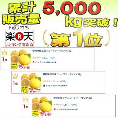 静岡県伊豆産ニューサマーオレンジ