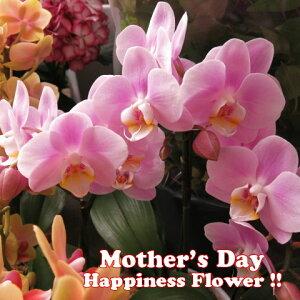 母の日 プレゼント 胡蝶蘭 鉢植え ◆母の日ギフト 花鉢 かわいい胡蝶蘭 花言葉は…幸福が飛んでくる♪