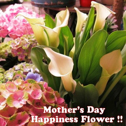 母の日 お届け フラワーギフト 白カラー 鉢植え 白系 ◆母の日ギフト 花鉢 ホワイトカラー 母の日期間限定ギフト