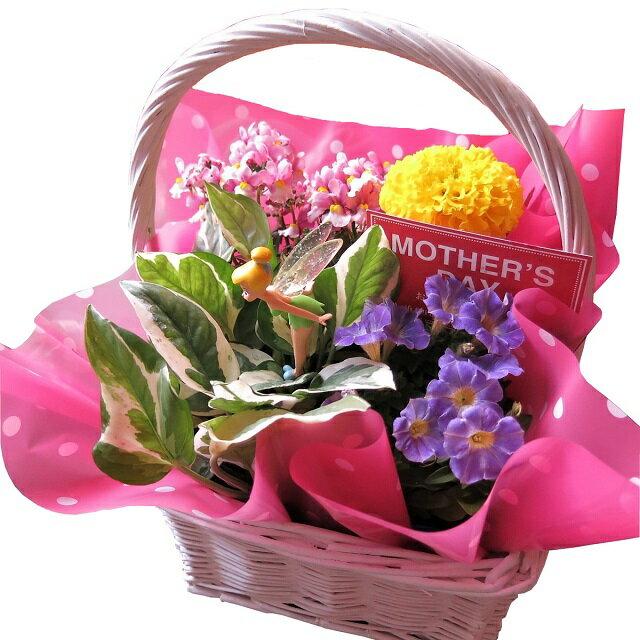 母の日 ディズニー 鉢植え ティンカーベル 入り 季節のお花お任せギフト 花鉢 プレゼント 鉢植え disny