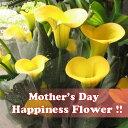 母の日 カラー プレゼント イエロー系 ◆母の日ギフト 花鉢 鉢植え 黄色系