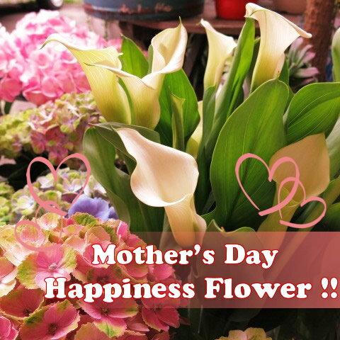 母の日 カラー プレゼント 鉢植え 白系 ◆母の日ギフト 花鉢 ホワイトカラー