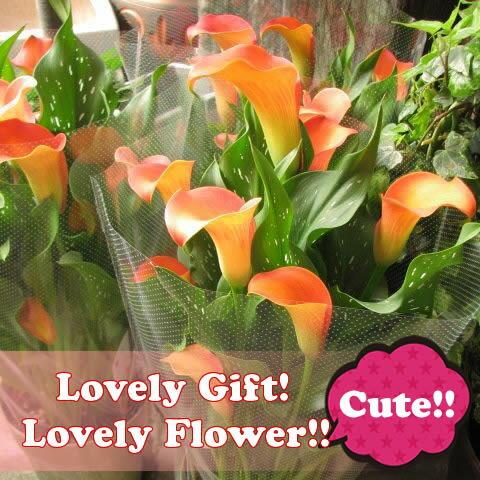 母の日 ギフト カラー オレンジ系 ◆母の日ギフト プレゼント 鉢植え 花鉢
