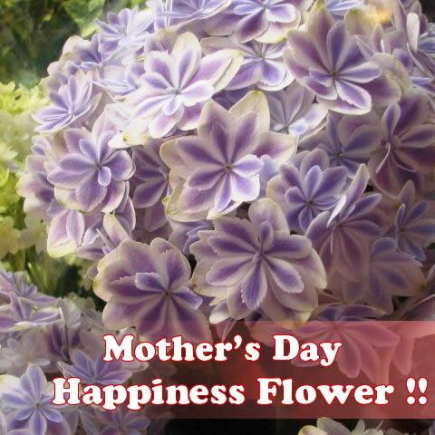 母の日 プレゼント 鉢植え 万華鏡 あじさい ブルー ◆母の日ギフト 花鉢 あじさい 万華鏡