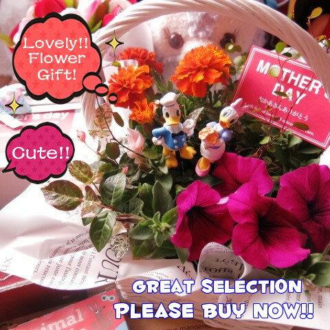 母の日 鉢植え ギフト ディズニー フラワーギフト 季節のお花お任せギフト♪ ドナルド デージー入り 母の日 花鉢 プレゼント