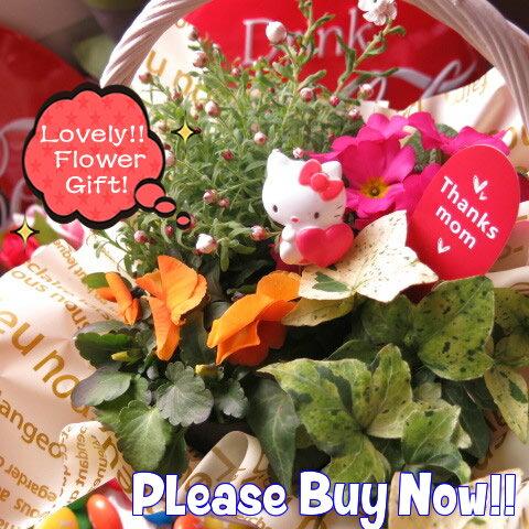母の日 鉢植え キティ入りギフト 季節のお花お任せギフト♪ キティカラーはおまかせ 母の日 花鉢 プレゼント